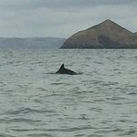 A Bay To Remember Wildlife Boat Trips Picture