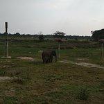 Φωτογραφία: Way Kambas National Park