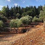 Photo of Askos Stone Park