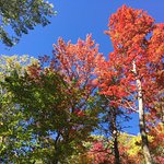 Foliage in Vermont