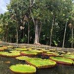 Photo of SSR Botanic Garden