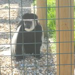 One of the many monkey at Monkey Haven