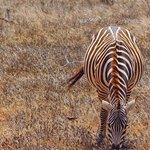 Photo of Joseph e Toyota Kenya safari - Day Trips