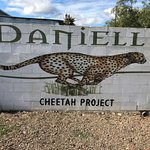 Φωτογραφία: Daniell Cheetah Project