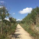 Foto de Parque natural s'Albufera de Mallorca