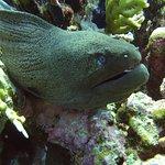 Фотография Seaworld Diving Center