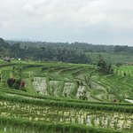Photo of Jatiluwih Green Land