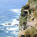 Latrabjarb bird cliffs June 2018