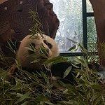 Foto di Tiergarten Schoenbrunn - Zoo Vienna