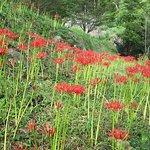 Фотография Butsuryuji Temple