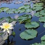 密蘇里植物園照片
