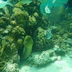 Bild från Sail Cayman Ltd.