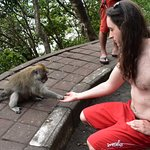hand feed wild monkeys