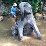 ภาพถ่ายของ ปางช้างแม่สา