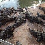 Кормление крокодилов