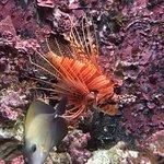 Okinawa Churaumi Aquarium Foto