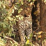 Фотография African Guide Adventure