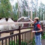 Я, как всегда, с верблюдом ;)
