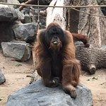 Tierpark Hagenbeck Foto