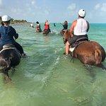 Provo Ponies Foto