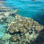 Coral Beach Nature Reserve Foto