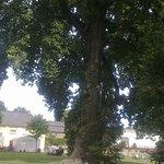 Ein gewaltiger Baum von vielen