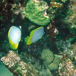 Two of our underwater Honduran friends at Roatan