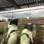 Bild från Kyoto Aquarium
