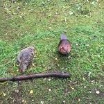 Photo de Ranua Zoo