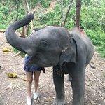Doiinthanon Elephant Park照片