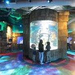 صورة فوتوغرافية لـ Audubon Aquarium of the Americas