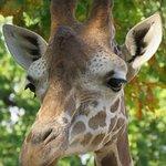 Berlin Zoological Garden Foto