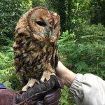 A tawney owl!