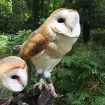 Holding the sweetest barn owls!