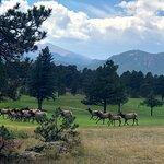 Huge buck and his herd.