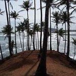 Coconut trees hills in Mirissa