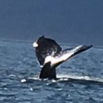 Breathtaking whale watching tour