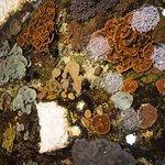 Coral reef lagoon