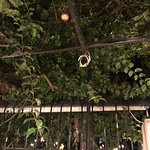 Bild från Lemonokipos Restaurant (Lemon Tree Garden)