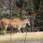 ภาพถ่ายของ สวนสัตว์เทนโนจิ