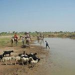 Zdjęcie Rajput Cultural Adventures