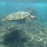 Huge sea turtle!