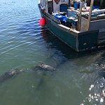Foto de Chatham Pier and Fish Market