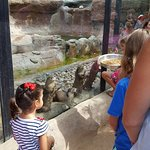 Foto de Animal World and Snake Farm Zoo