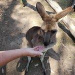 Lone Pine Koala Sanctuary Foto