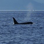 Photo of Eagle Wing Whale Watching Tours