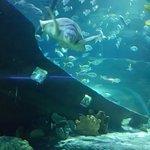 Photo of Aquaria KLCC