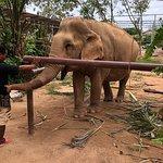 Samui Elephant Sanctuary Foto