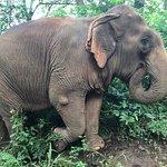 Photo of Elephant Nature Park