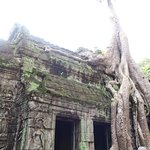 the tree is part of the ruins